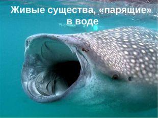 Живые существа, «парящие» в воде