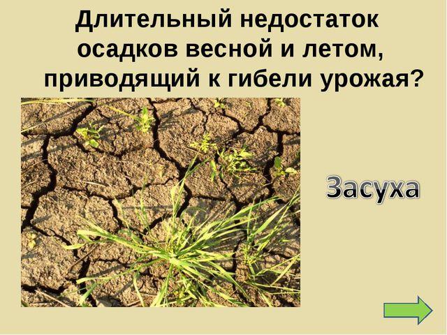 Длительный недостаток осадков весной и летом, приводящий к гибели урожая?