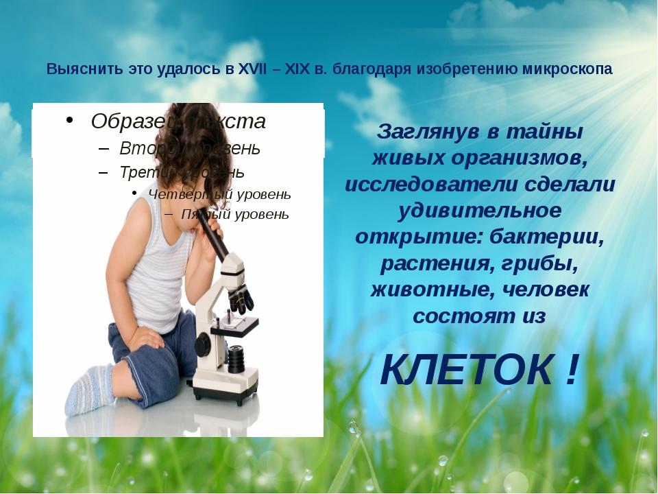 Выяснить это удалось в XVII – XIX в. благодаря изобретению микроскопа Загляну...