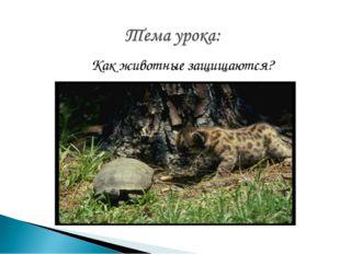 Как животные защищаются?