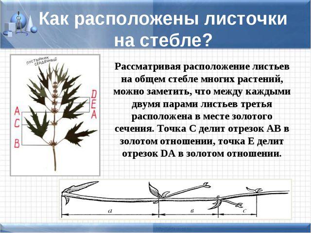 Как расположены листочки на стебле? Рассматривая расположение листьев на обще...