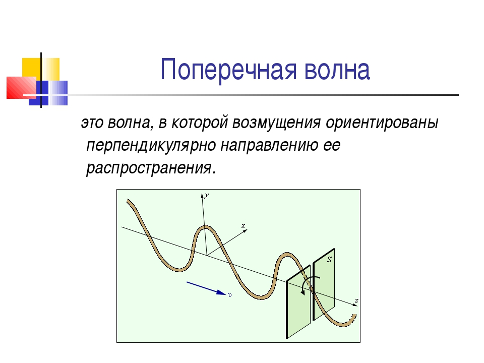 Поперечная волна это волна, в которой возмущения ориентированы перпендикулярн...