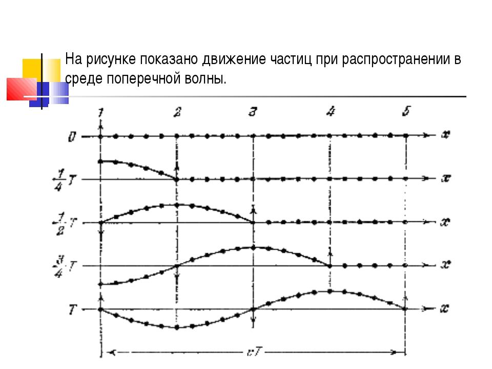 На рисунке показано движение частиц при распространении в среде поперечной во...