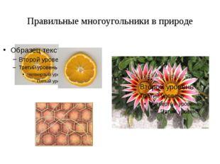 Правильные многоугольники в природе