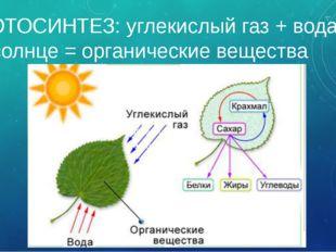 ФОТОСИНТЕЗ: углекислый газ + вода + солнце = органические вещества Таким обра