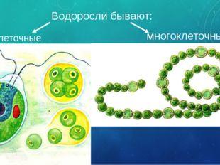 Водоросли бывают: одноклеточные многоклеточные Водоросли – очень древние орга