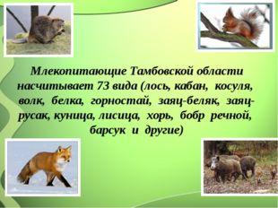 Млекопитающие Тамбовской области насчитывает 73 вида (лось, кабан, косуля, в