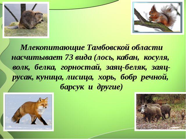 Млекопитающие Тамбовской области насчитывает 73 вида (лось, кабан, косуля, в...