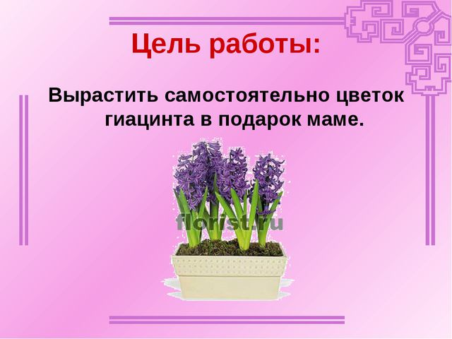 Цель работы: Вырастить самостоятельно цветок гиацинта в подарок маме.