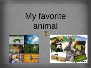 My favorite animal 