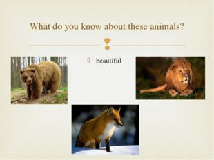 beautiful What do you know about these animals? 