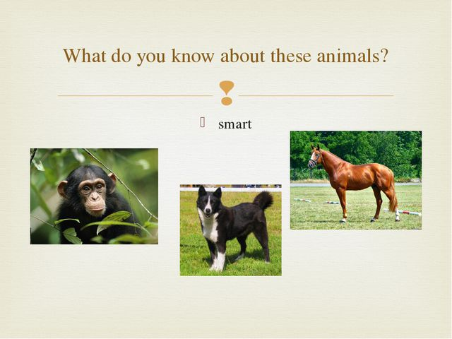 smart What do you know about these animals? 