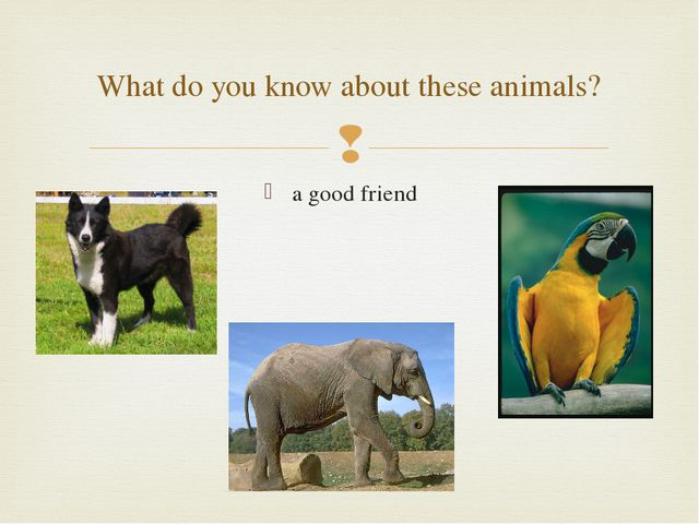 a good friend What do you know about these animals? 