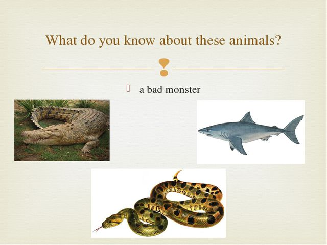 a bad monster What do you know about these animals? 