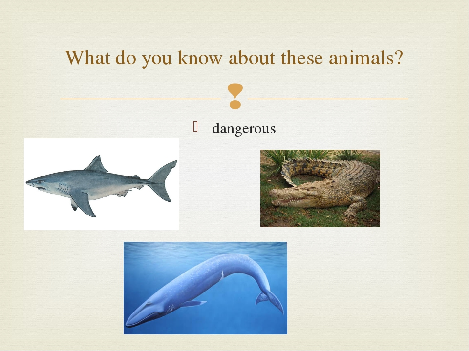 dangerous What do you know about these animals? 