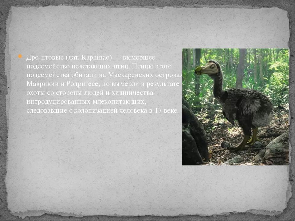 Дро́нтовые (лат. Raphinae) — вымершее подсемейство нелетающих птиц. Птицы это...