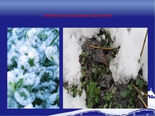 Значение снега и льда в природе и жизни человека