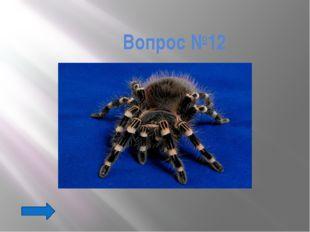 Вопрос №22 К какому отряду насекомых относятся бабочки?