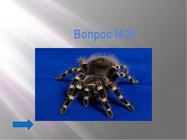 Вопрос №44 Небольшим количеством яда этих домашних насекомых лечат некоторые...