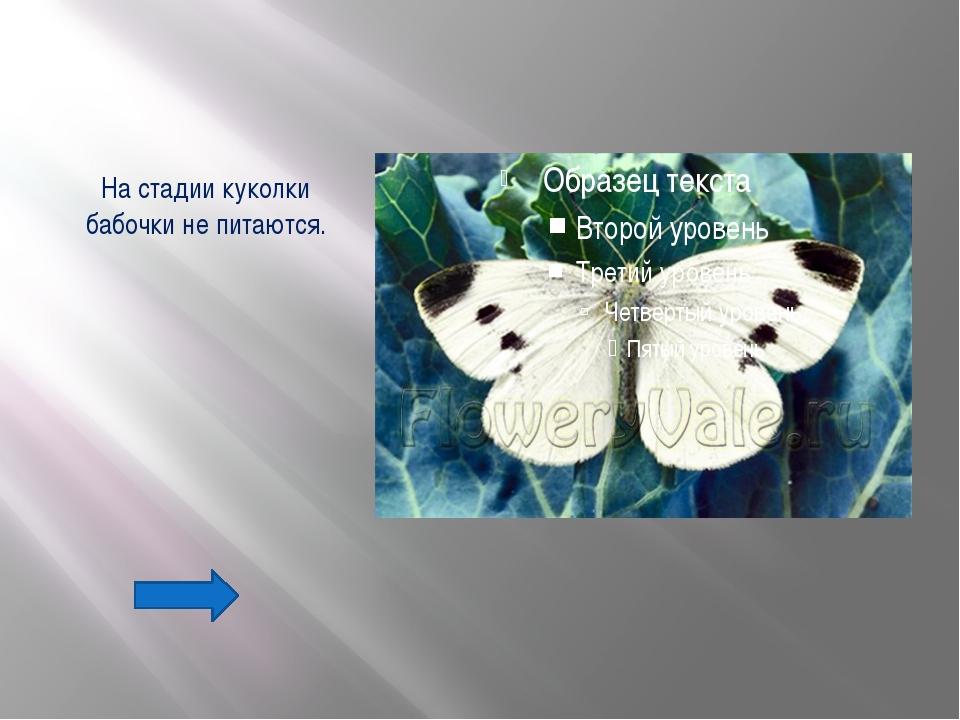 Вопрос №46 Данный паук своим ядом парализует добычу, впрыскивает в ее тело яд...