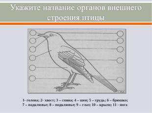 1- голова; 2- хвост; 3 – спина; 4 – шея; 5 – грудь; 6 – брюшко; 7 – надклювье