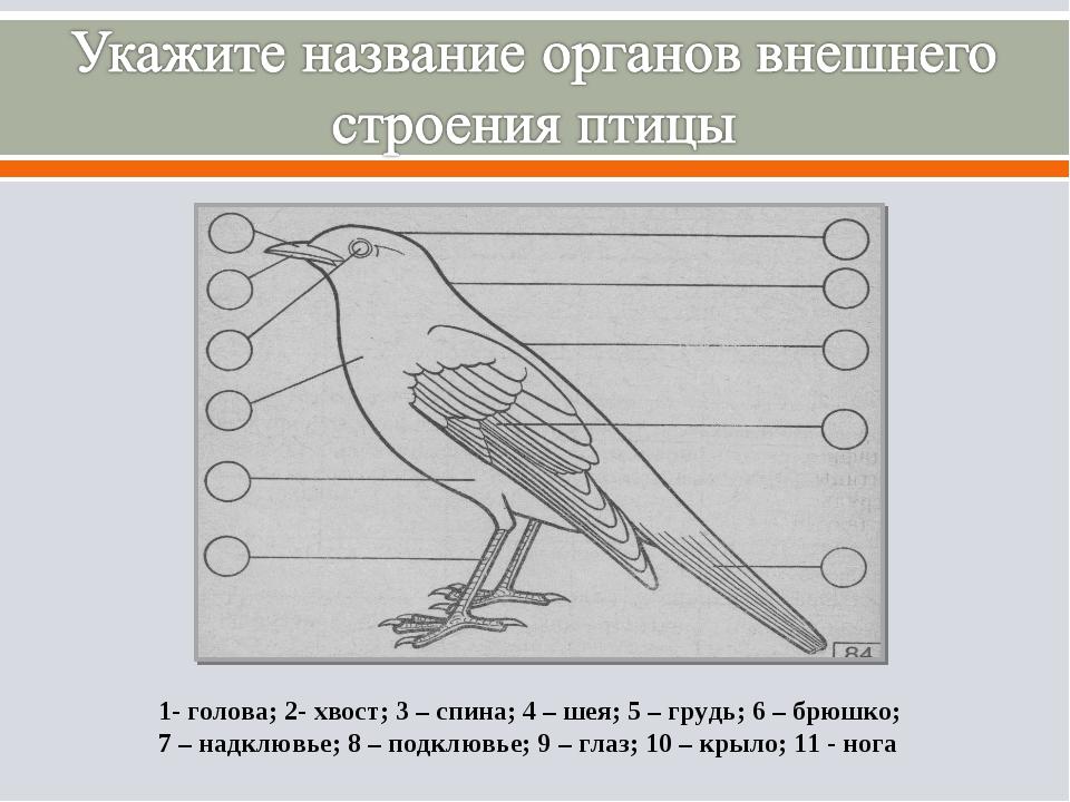 1- голова; 2- хвост; 3 – спина; 4 – шея; 5 – грудь; 6 – брюшко; 7 – надклювье...