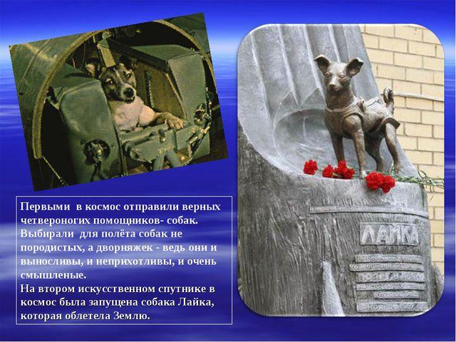 Первыми в космос отправили верных четвероногих помощников- собак. Выбирали дл...