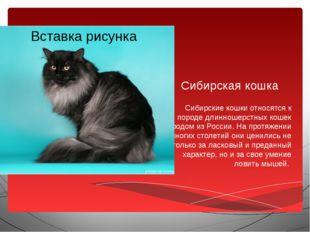Сибирская кошка Сибирские кошки относятся к породе длинношерстных кошек родом