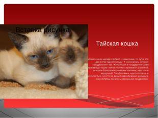 Тайская кошка Тайских кошек нередко путают с сиамскими, по сути, это две ветв