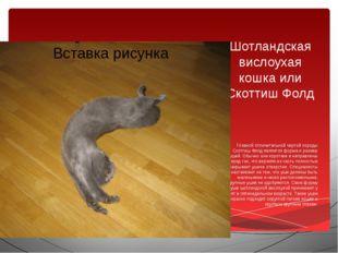Шотландская вислоухая кошка или Скоттиш Фолд Главной отличительной чертой пор