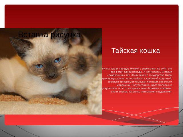Тайская кошка Тайских кошек нередко путают с сиамскими, по сути, это две ветв...