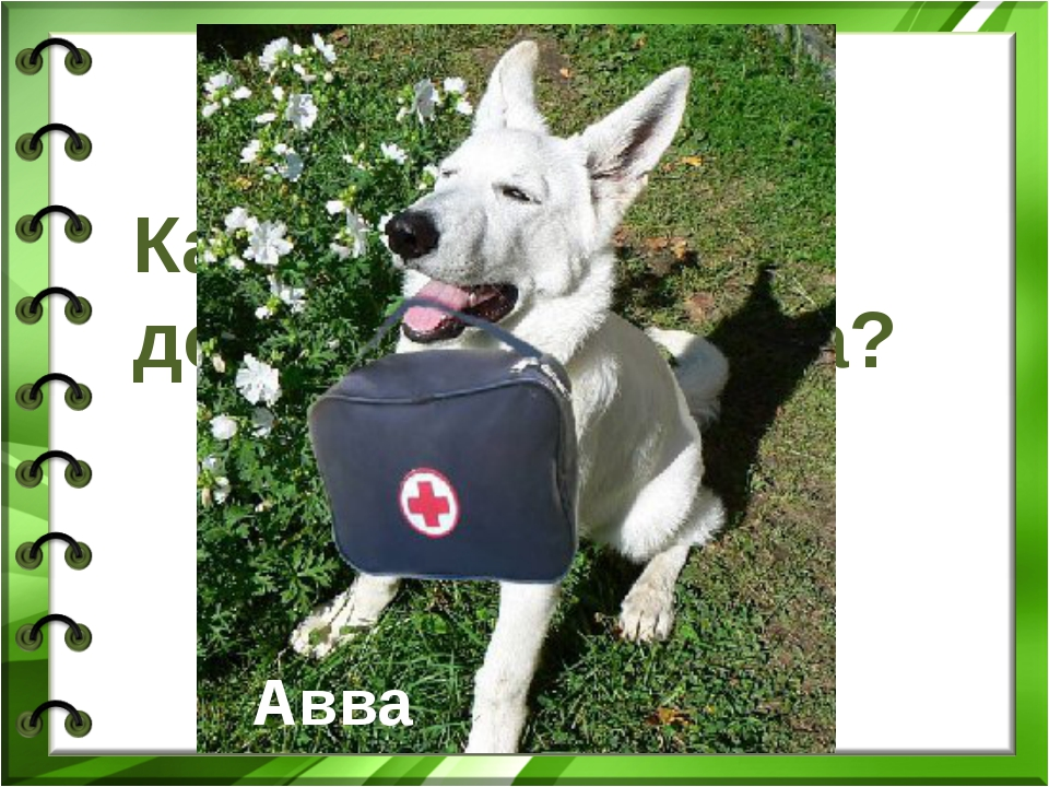 Как звали собаку доктора Айболита? Авва