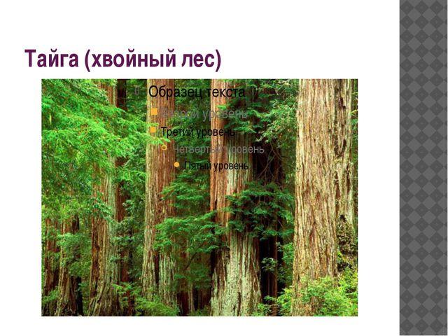Тайга (хвойный лес)