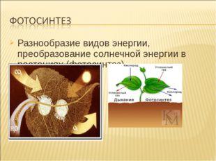 Разнообразие видов энергии, преобразование солнечной энергии в растениях (фот