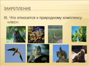 III. Что относится к природному комплексу «лес»: III. Что относится к природ