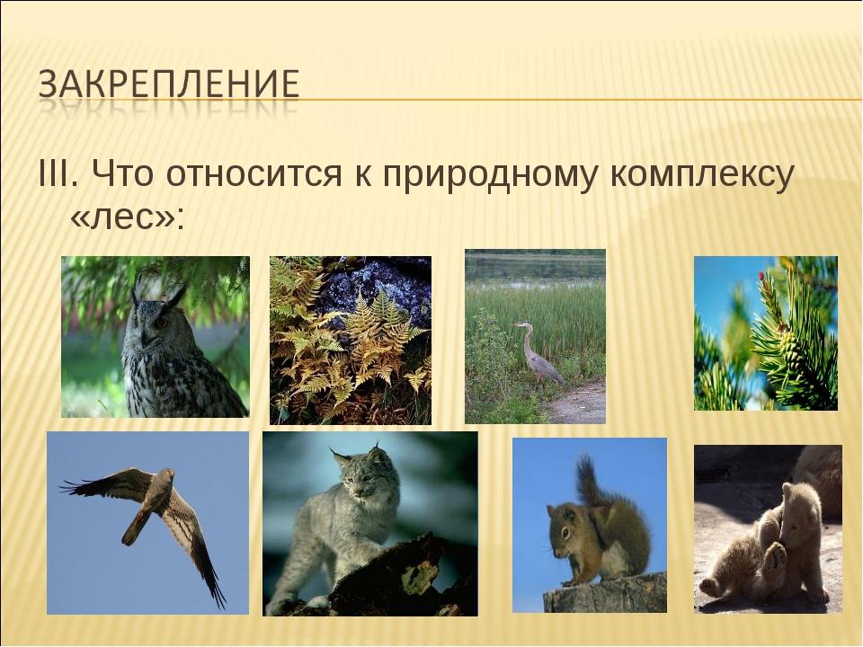 III. Что относится к природному комплексу «лес»: III. Что относится к природ...