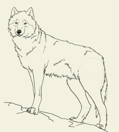 http://www.aurorafilm.no/wp-admin/css/wolf-drawing-pictures-i2.jpg