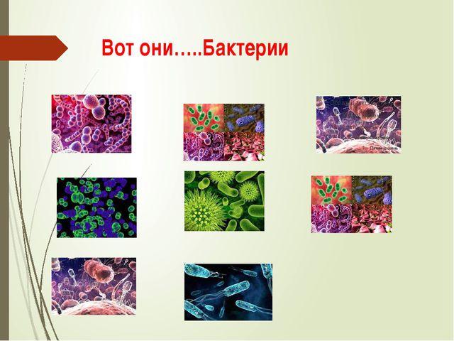 Вот они…..Бактерии