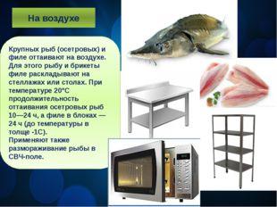 На воздухе Крупных рыб (осетровых) и филе оттаивают на воздухе. Для этого рыб