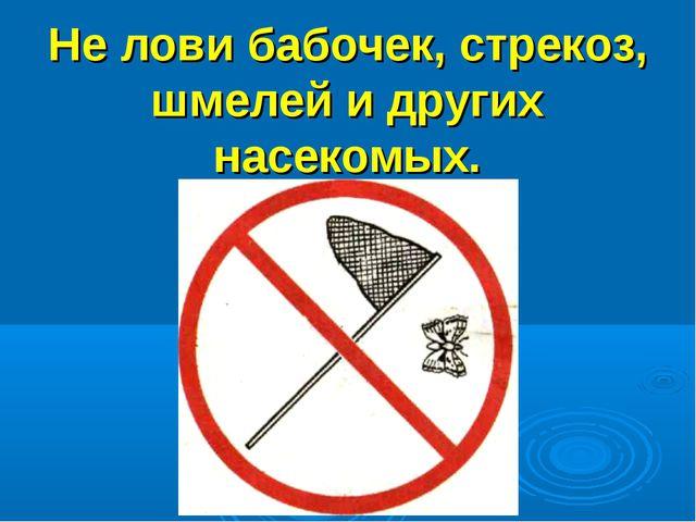 Не лови бабочек, стрекоз, шмелей и других насекомых.