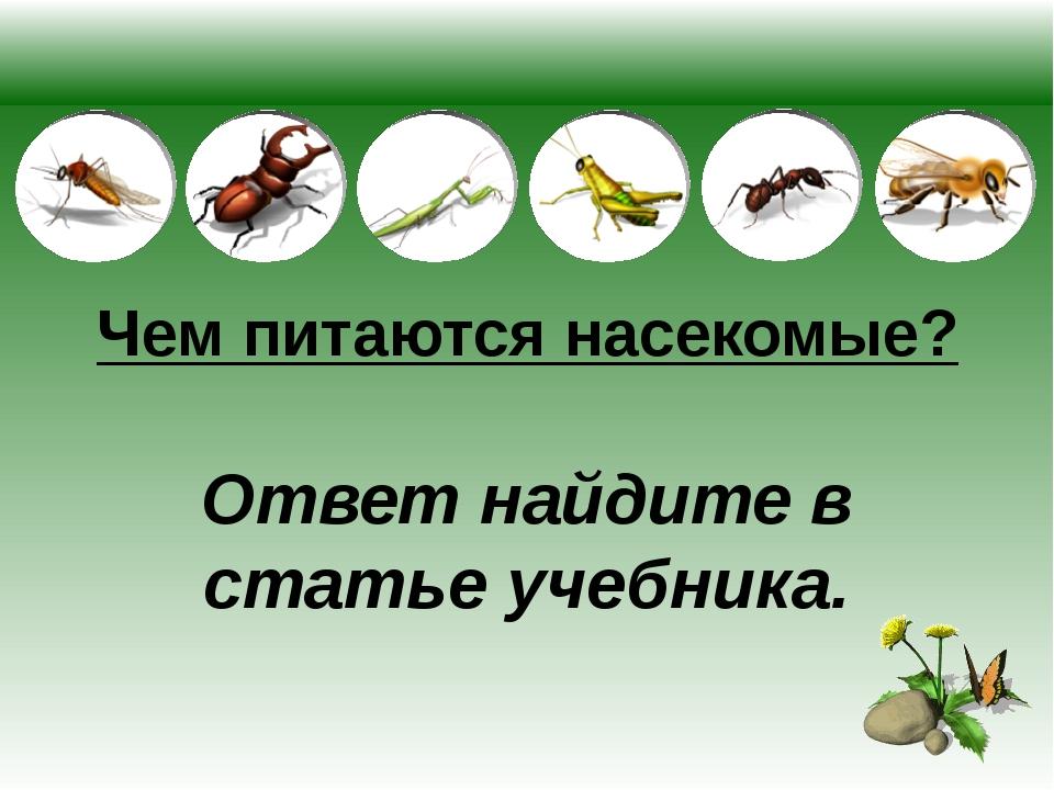 Чем питаются насекомые? Ответ найдите в статье учебника.
