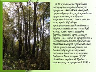 В 12 км от села Кузедеево раскинулось чудо сибирской природы - липовый остро