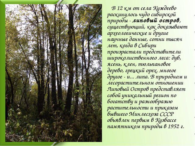 В 12 км от села Кузедеево раскинулось чудо сибирской природы - липовый остро...