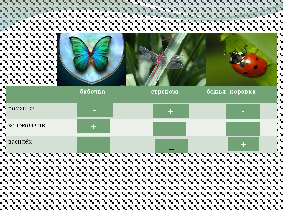 бабочка бабочка стрекоза божьякоровка ромашка колокольчик василёк - - - + + _...