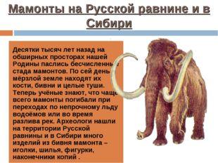 Мамонты на Русской равнине и в Сибири Десятки тысяч лет назад на обширных про