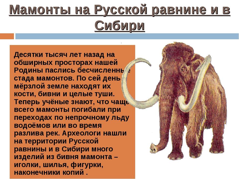 Мамонты на Русской равнине и в Сибири Десятки тысяч лет назад на обширных про...