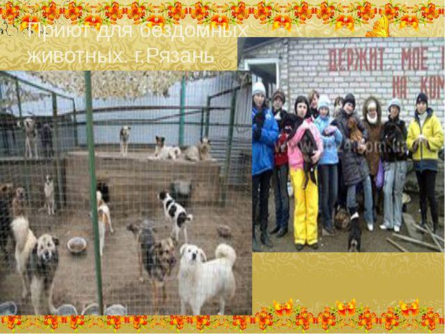 Приют для бездомных животных. г.Рязань