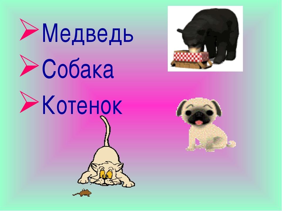 Медведь Собака Котенок