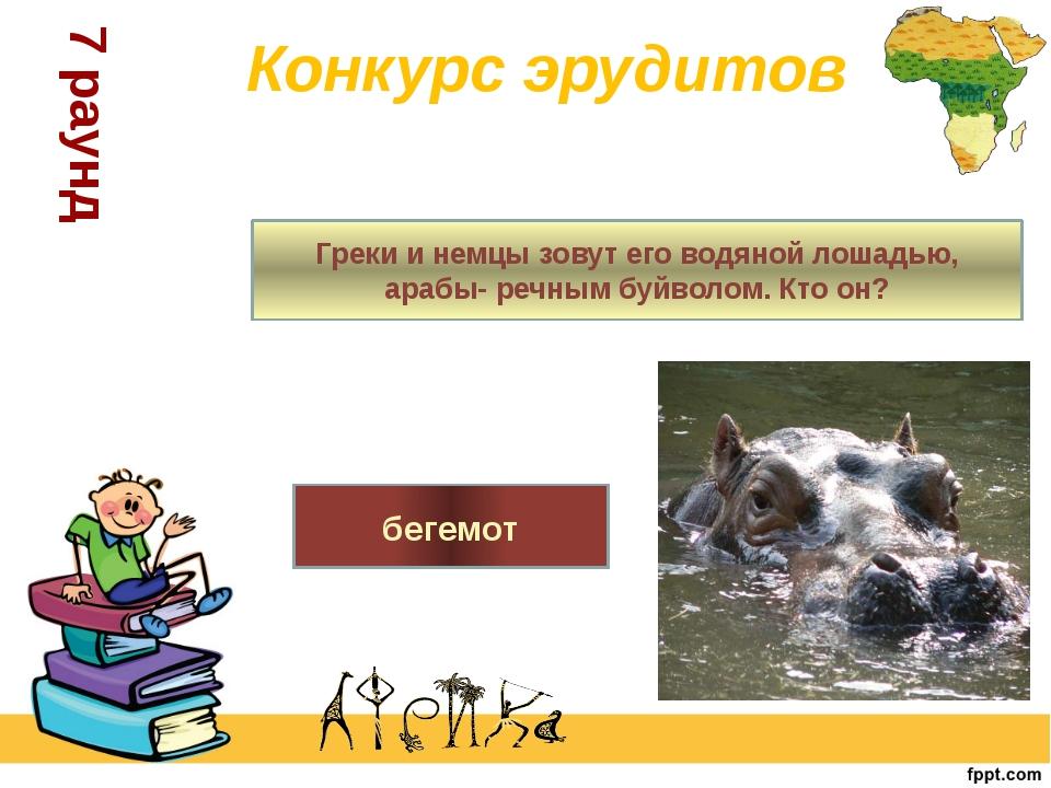 Греки и немцы зовут его водяной лошадью, арабы- речным буйволом. Кто он? беге...