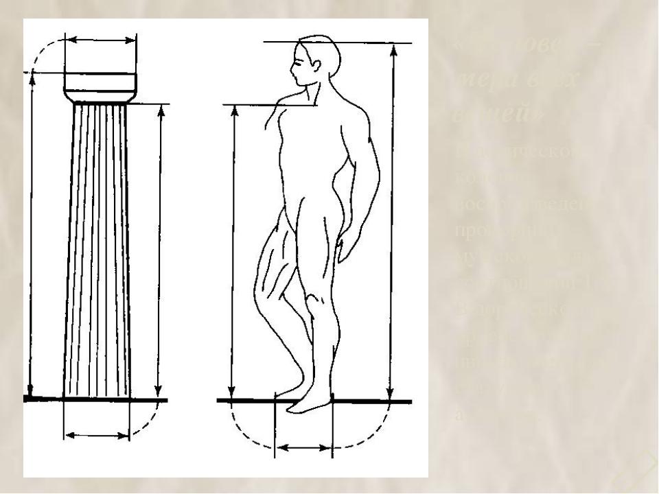 «Человек – мера всех вещей» В дорической колонне воспроизведены пропорции муж...